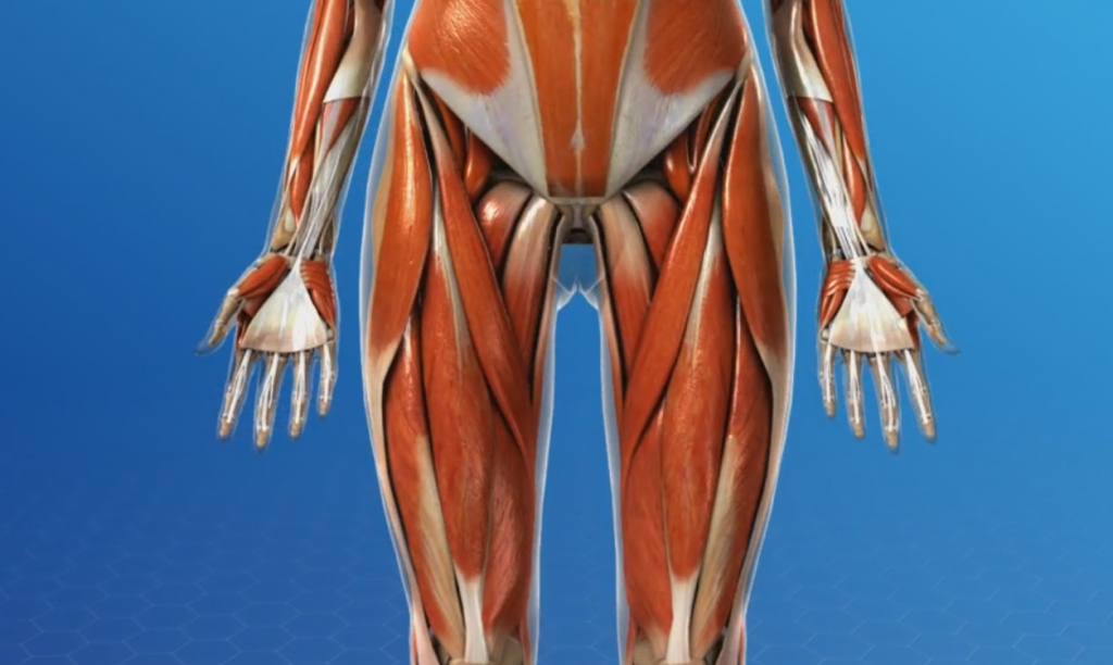 All You Need to Know About Unlock Your Hip Flexors